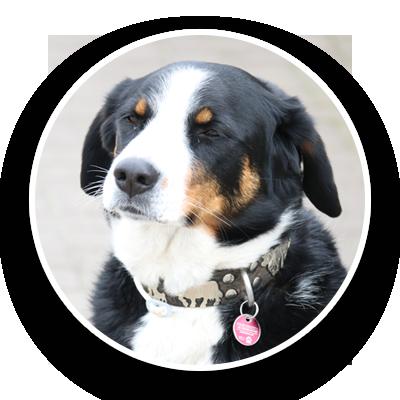Wachhund Dyson